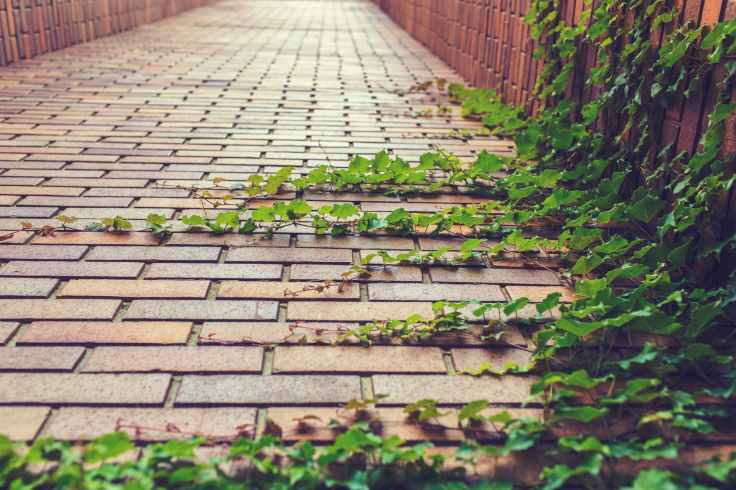 nature-path-plants-grow-rampant.jpg